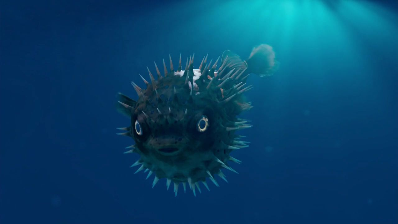 Pufferfish observed by the Doctor