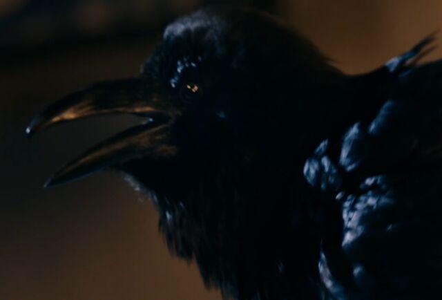File:Quantum Shade raven.jpg