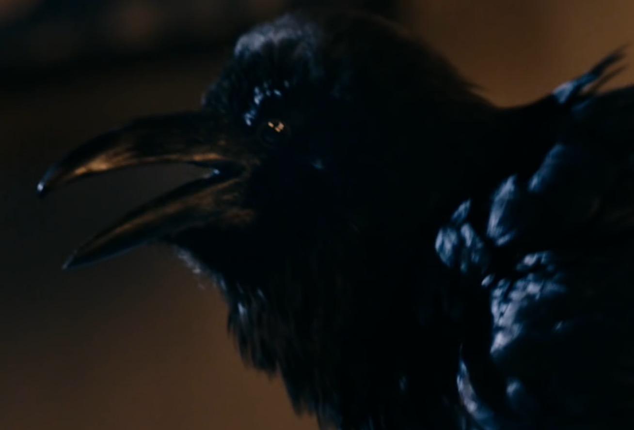 Quantum Shade raven
