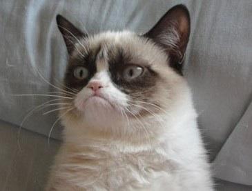 File:Cat ninja.jpg