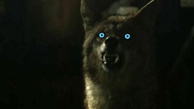 Malia-coyote-form-Teen-Wolf-Season-6-Episode-3-Sundowning.jpg