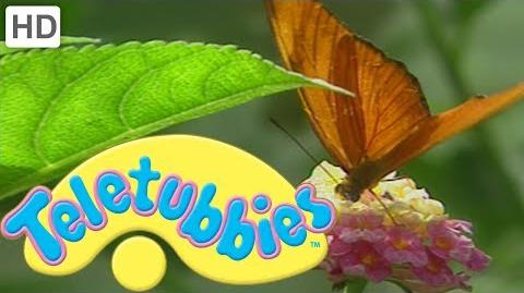 Teletubbies Butterfly - HD Video