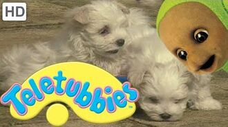 Teletubbies- Puppies - HD Video