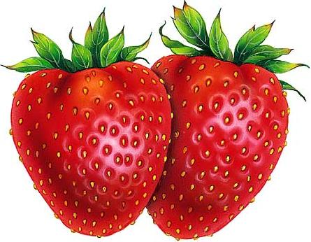 Image - Strawberry drawing-18210.jpg | Tempora: Harmony of ... Zinnia Flower Drawing