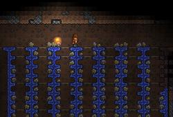 Mushroom1farming