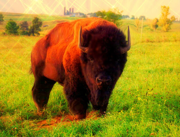 File:Bison Mutt.jpg