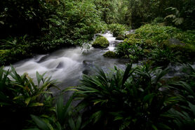 Jungle stream (La Selva Biological Station)