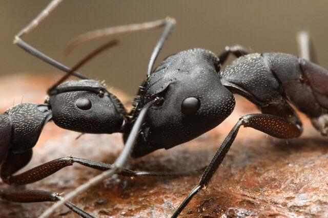 File:Ants.jpg