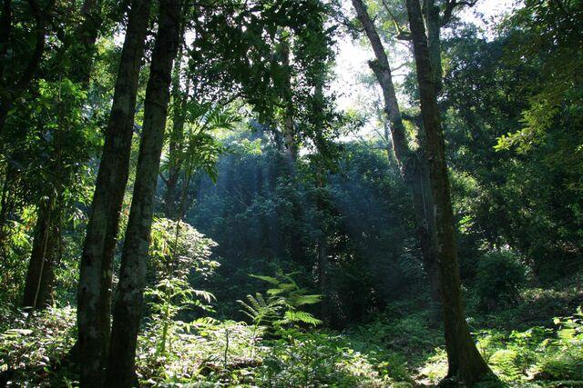 File:Gunung Palung Jungle.jpg