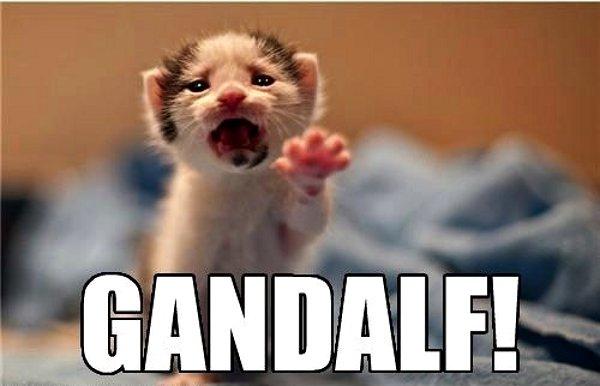 File:Gandalf-kitten.jpg