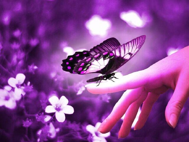File:Beautiful-Butterflies-1 beautiful-butterfly.jpg