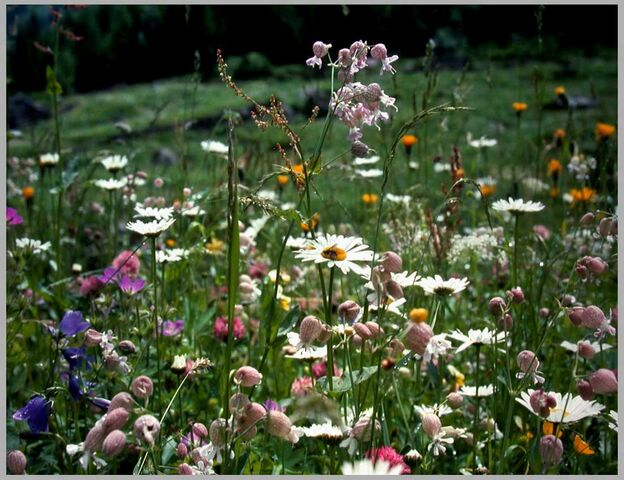 File:Summer-meadow.jpg