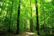 Forest Hunger Games