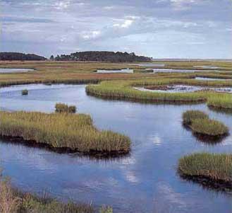 File:Tidal-marshes-72270.jpg