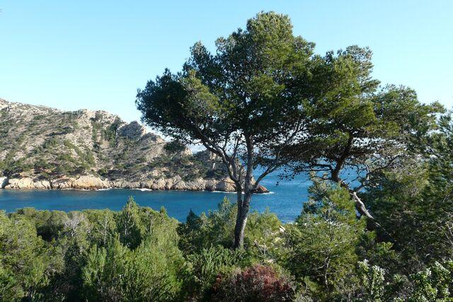 File:Mediterranean forest.jpg