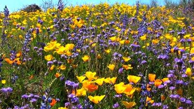 File:Wildflowers.jpg