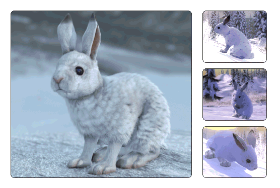 how to clean a snowshoe hare