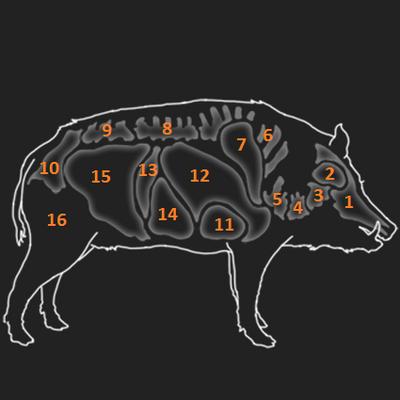 Feral hog organs