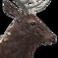 Rocky mountain elk male piebald
