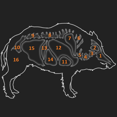 Wild boar organs