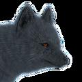 Arctic fox male blue