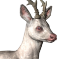 Roe deer male albino