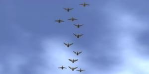 ABD flock