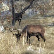 Species Reindeer D common
