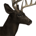 Whitetail deer male melanistic
