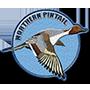 Northern pintail badge