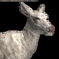 Red deer female albino