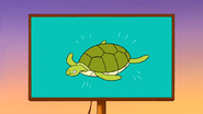 S6E15.100 Sea Turtles is the Source for Youth