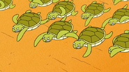 S6E15.200 A Bunch of Angry Baby Sea Turtles
