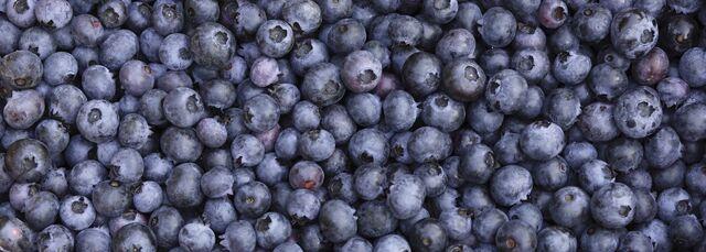 File:Blueberries--1400x500.jpg