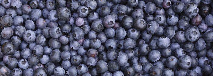 Blueberries--1400x500