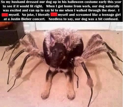 File:Dog spider costume.jpg