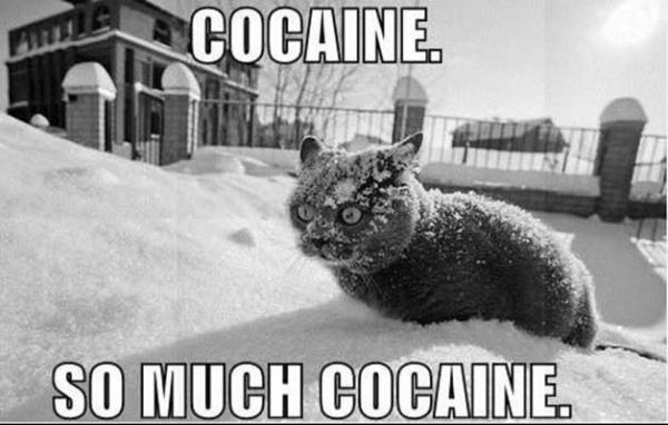 File:Cocaine-cat-cats-eccbc87e4b5ce2fe28308fd9f2a7baf3-497.jpg