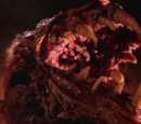 The Thing (organism)