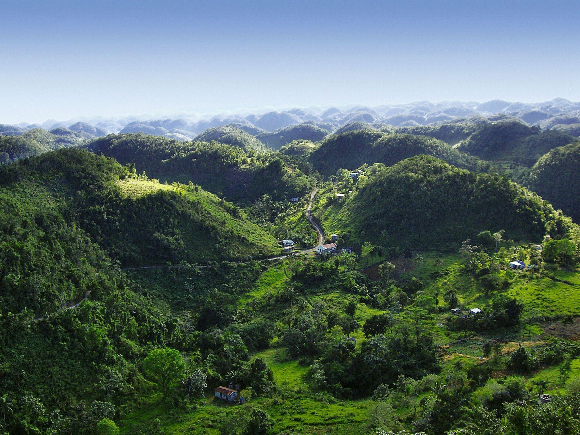 Výsledek obrázku pro coffee  jamaica