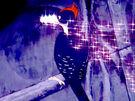 Diamond Beak Woodpecker