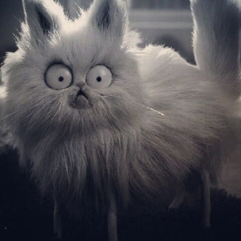 File:Mr.Whiskers.jpg