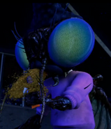 Fly eating coco