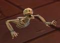 Skeletal Torso1