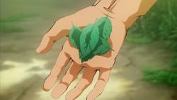 Mangrove Leaves OVA