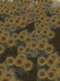 Miniatura de la versión de 20:54 8 ene 2014
