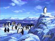Soldier penguins