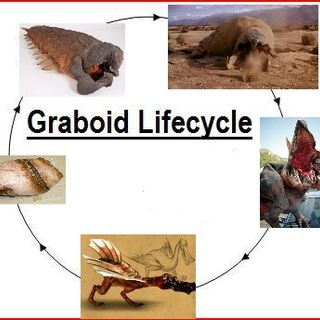 Graboid lifecycle diagram