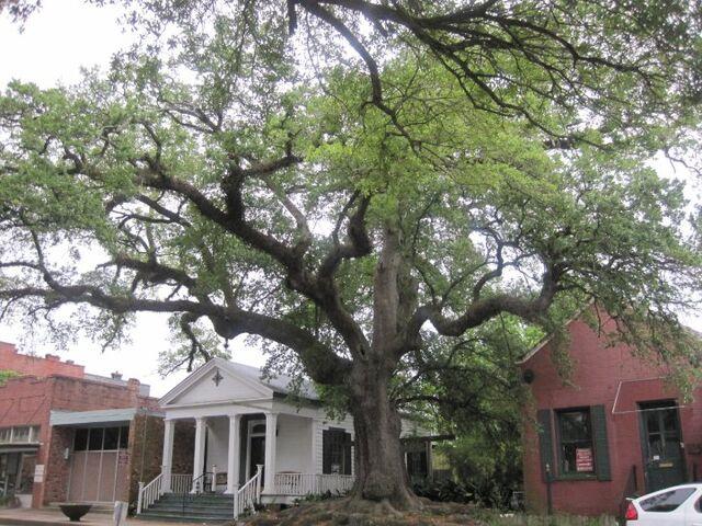 File:Jim Bowie home Opelousas, La.jpg