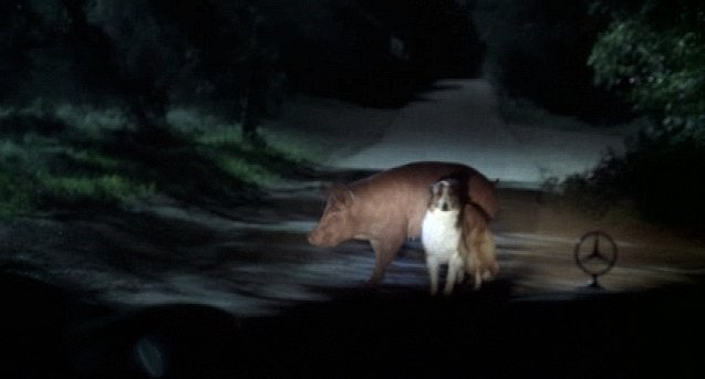 File:Pigdog.jpg