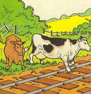Cows(magazinestory)2